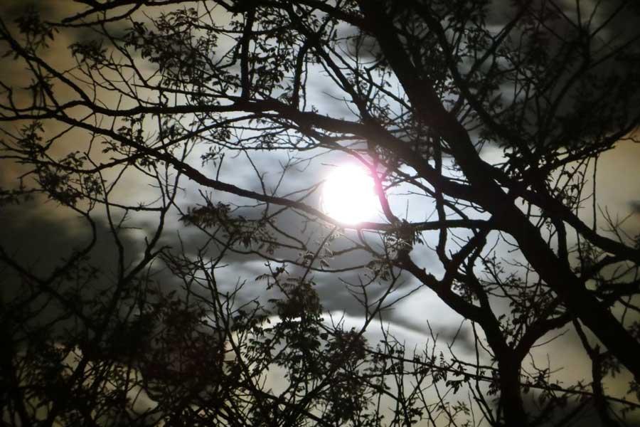 De volle maan schijnt tussen de takken van de bomen door