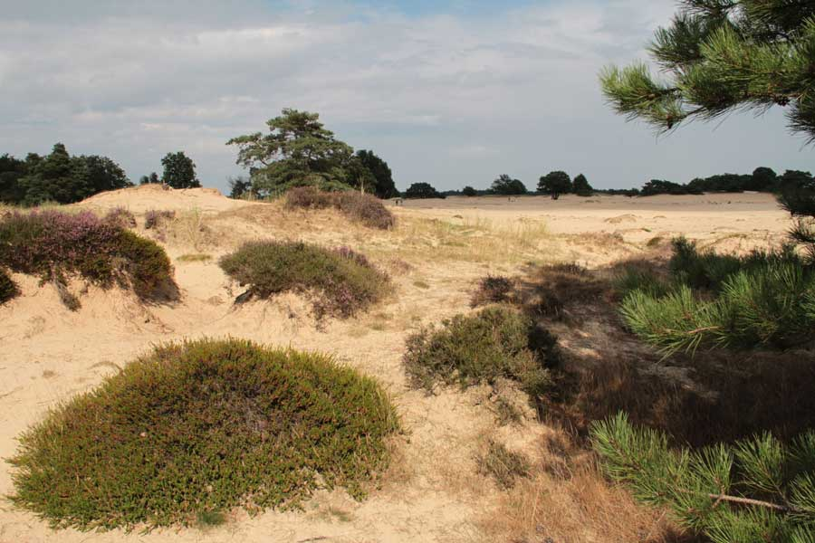 Stiltewandeling Drents-Friese Wold