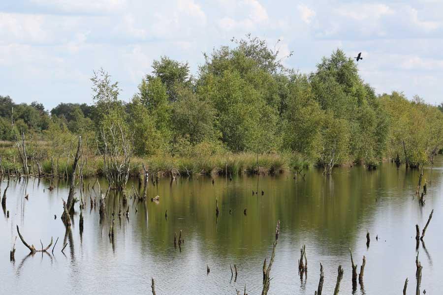 verdronken bomen in Bargerveen, Veenland