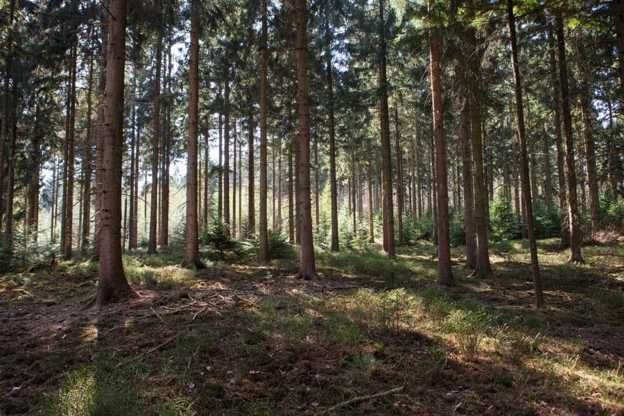 bomen in ugchelen veluwe