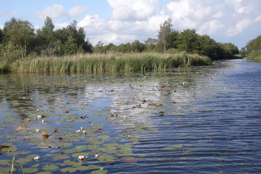 water en riet in weerribben